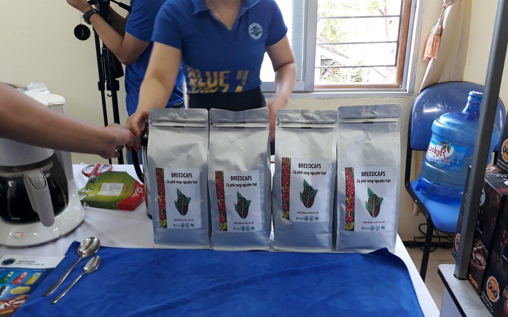 novas variedades de café