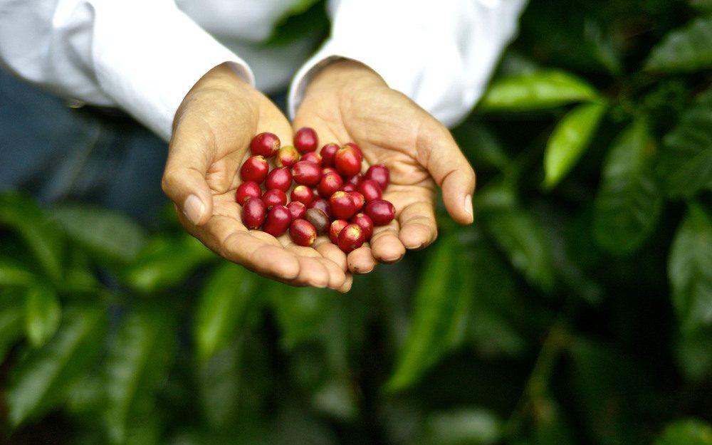café com carbono negativo