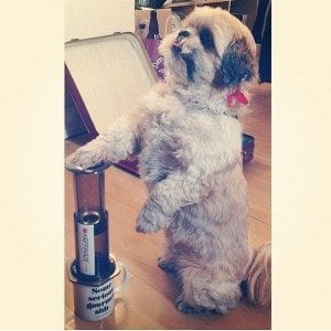 Dog using an aeropress