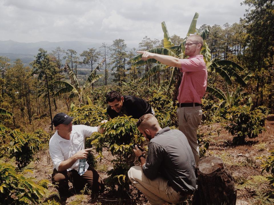 Men picking coffee cherries