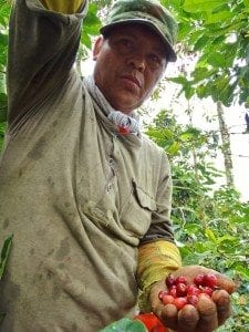 Man holding ripe cherries