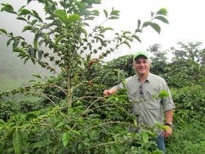 Man standing next to a coffee tree