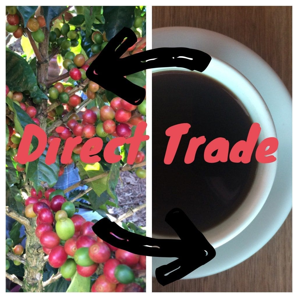 Direct-trade relationships of coffee traders