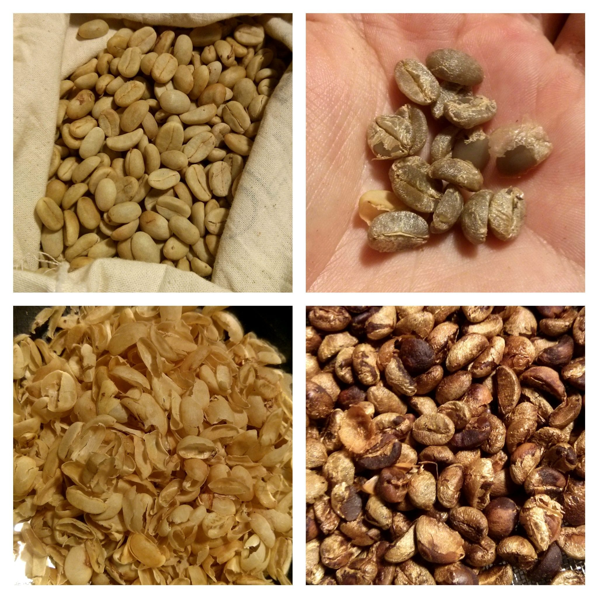the progression of the beans from the dried parchment stage to the roasting stage. I