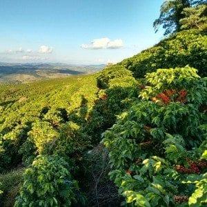 Coffee elevation in beautiful landscape