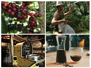 Collage of coffee production