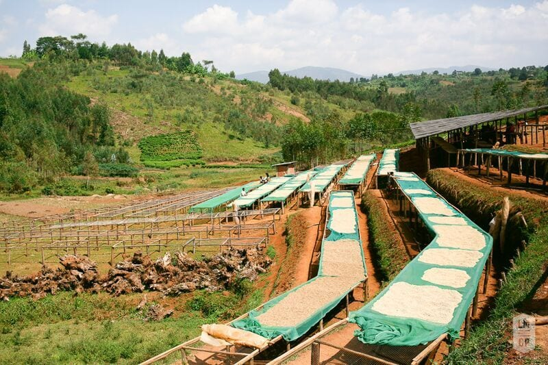 Bukeye station's drying beds.