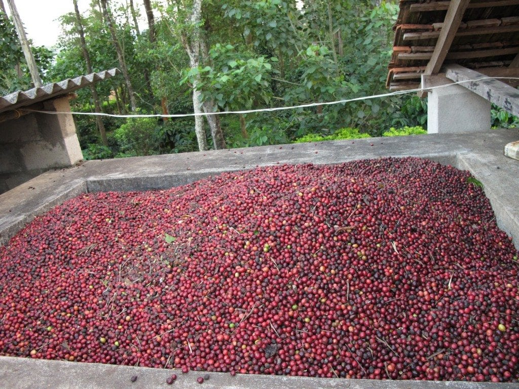 Indian_coffee_beans