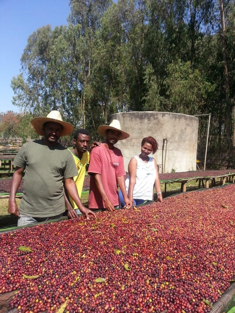 Dumerso Coffee drying beds