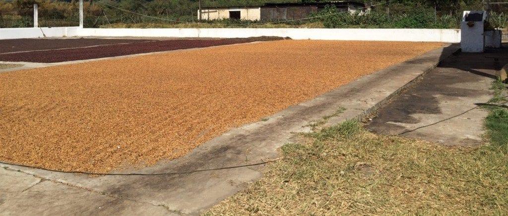 Sun dried, honey process