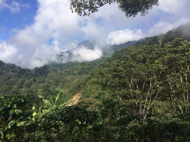 Coffee farm Santa Barbara, Honduras
