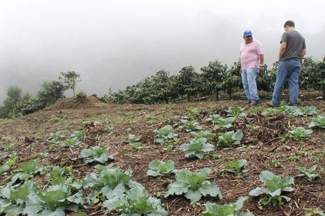 Coffee farm Honduras