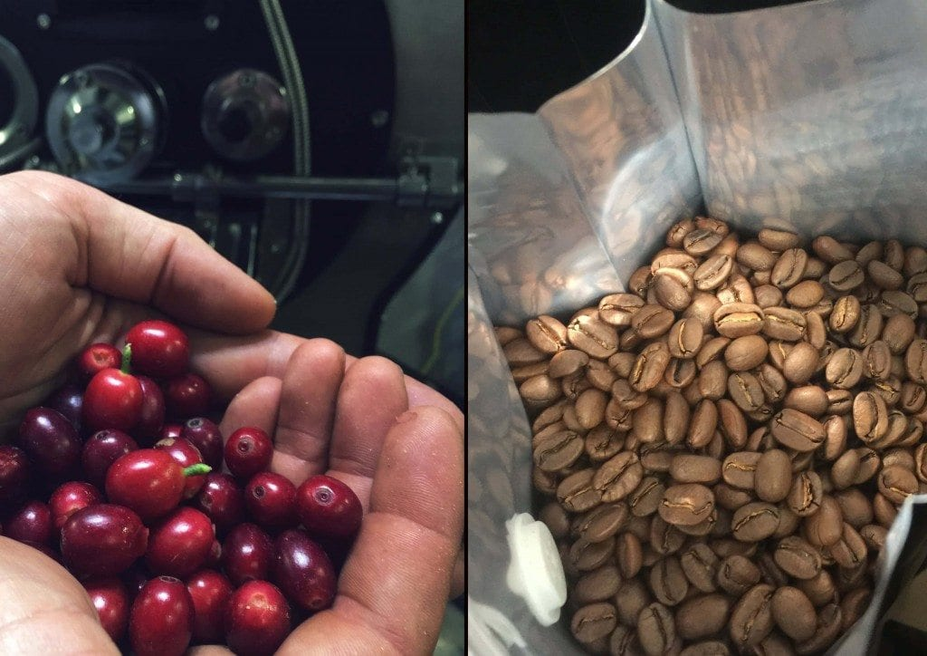 Coffee beans and coffee cherries
