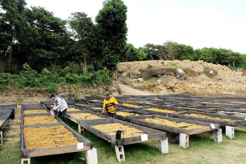 honey processing in El Salvador