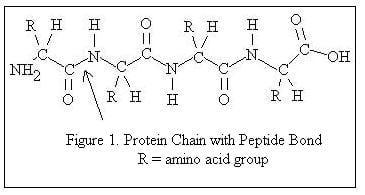 cadeia de aminoacidos do leite