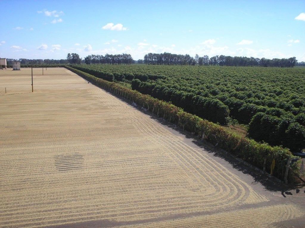 cerrado de minas coffee farm