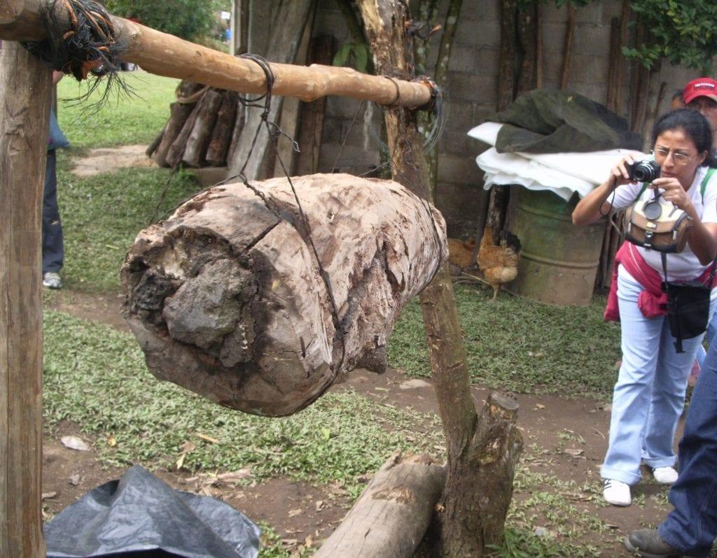 Log Nest for bees