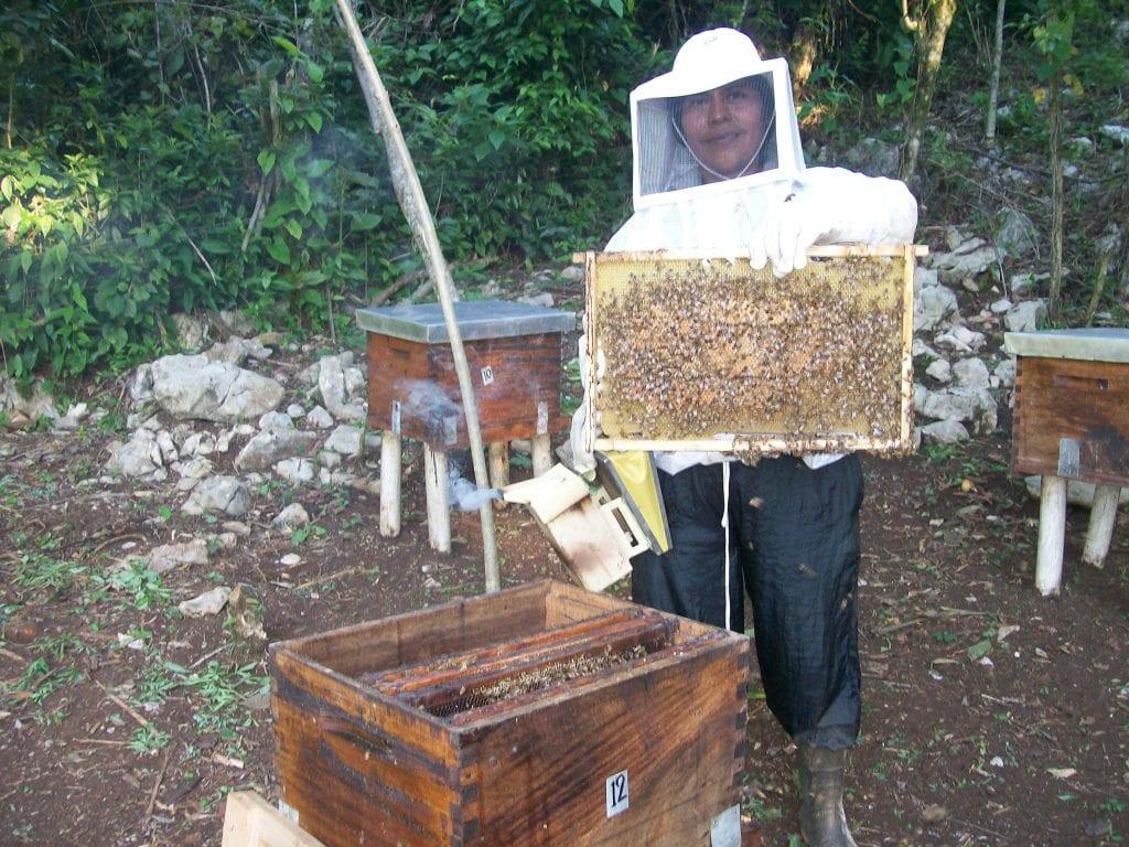 Maya Ixil Woman Beekeeper at work