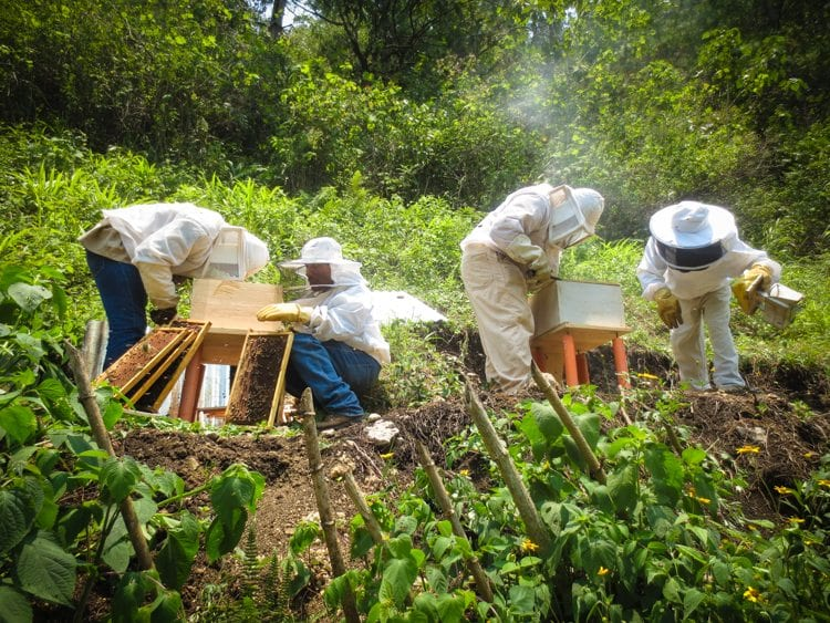 beekeepers working the CESMACH hives