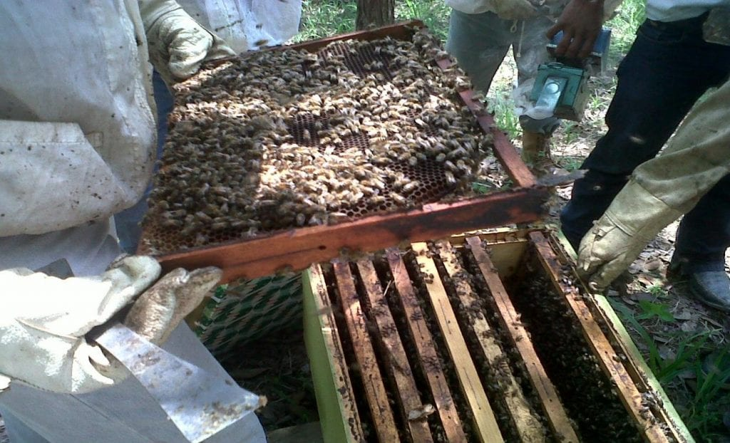 beekeepers inspecting beehives