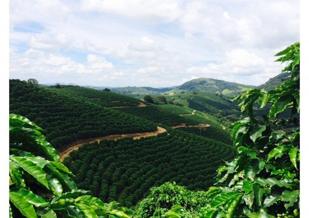 mogiana coffee region brazil