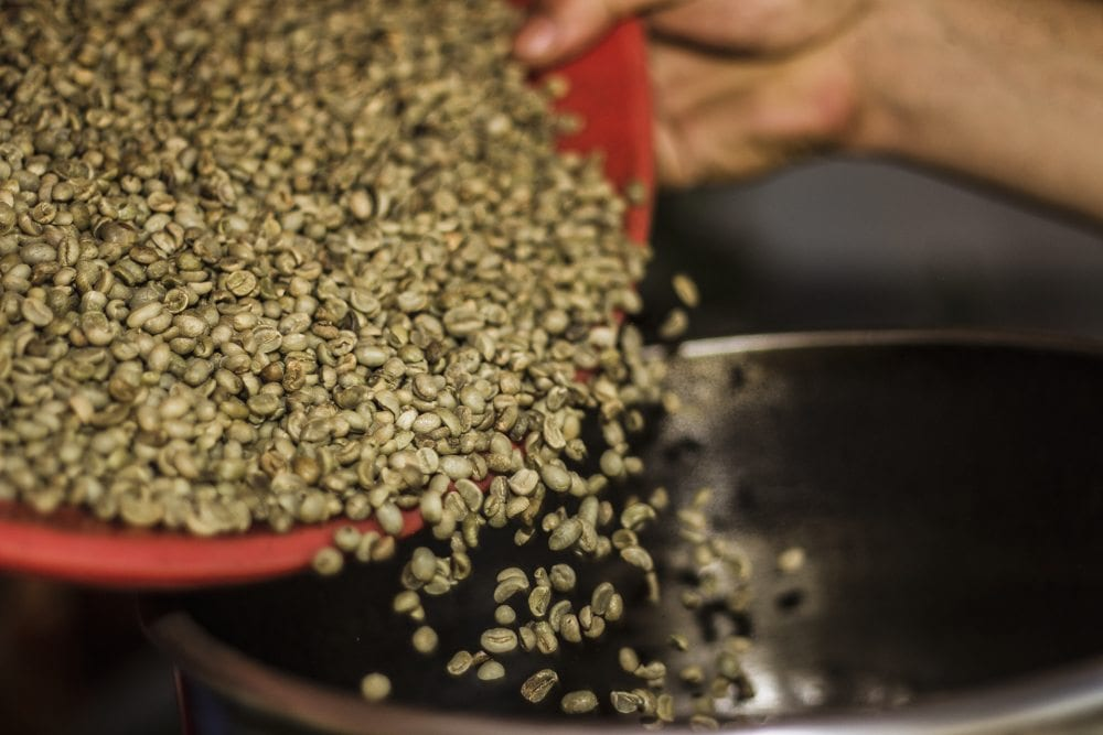 sorting green coffee beans