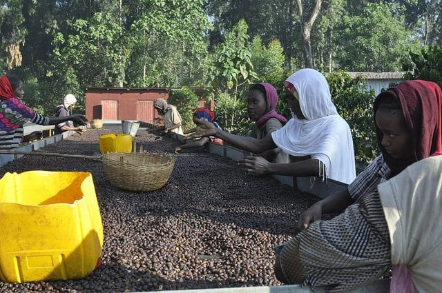 coffee workers