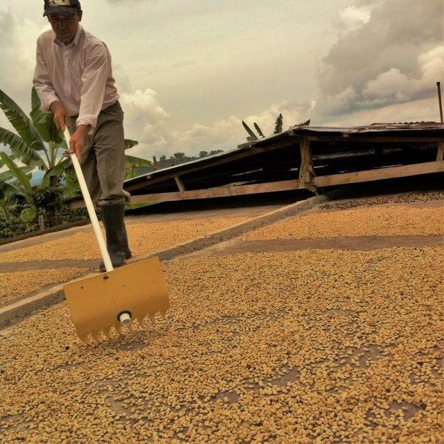 coffee worker