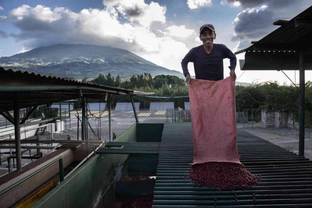 coffee worker guatemala