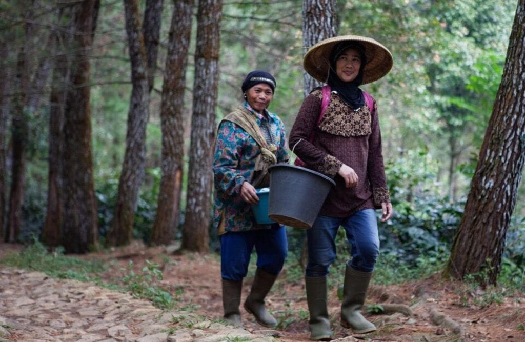 Two female indigenous coffee farmers