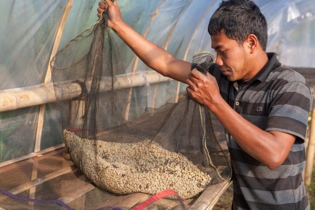 Olam Coffee Indonesia