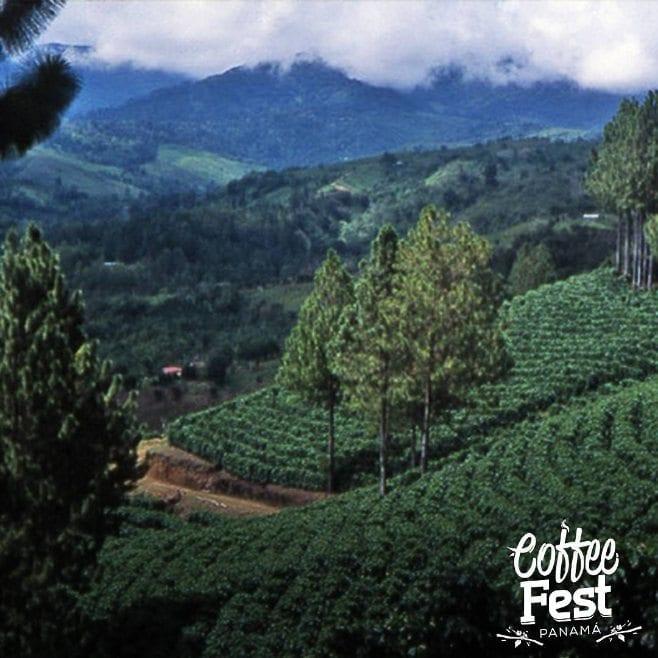Coffee farm in Panama