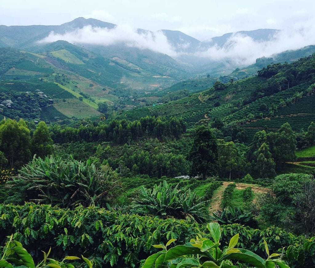 View from a coffee field