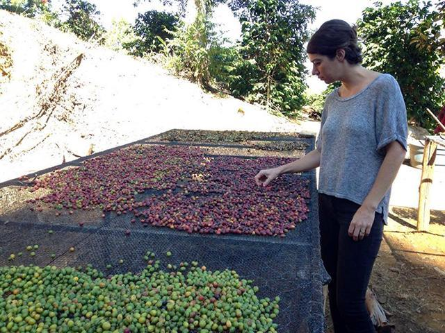 Andrea inspects coffee at Tres Barras,