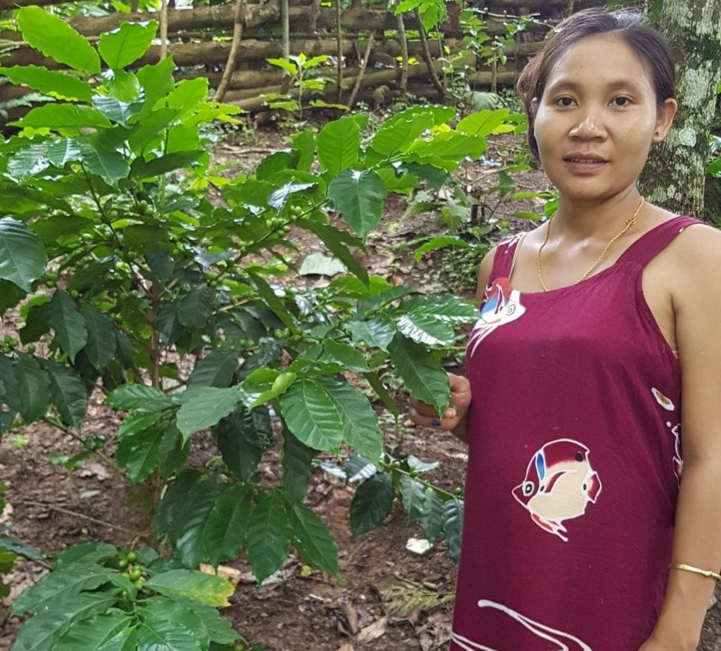 Lao female coffee farmer with coffee plant