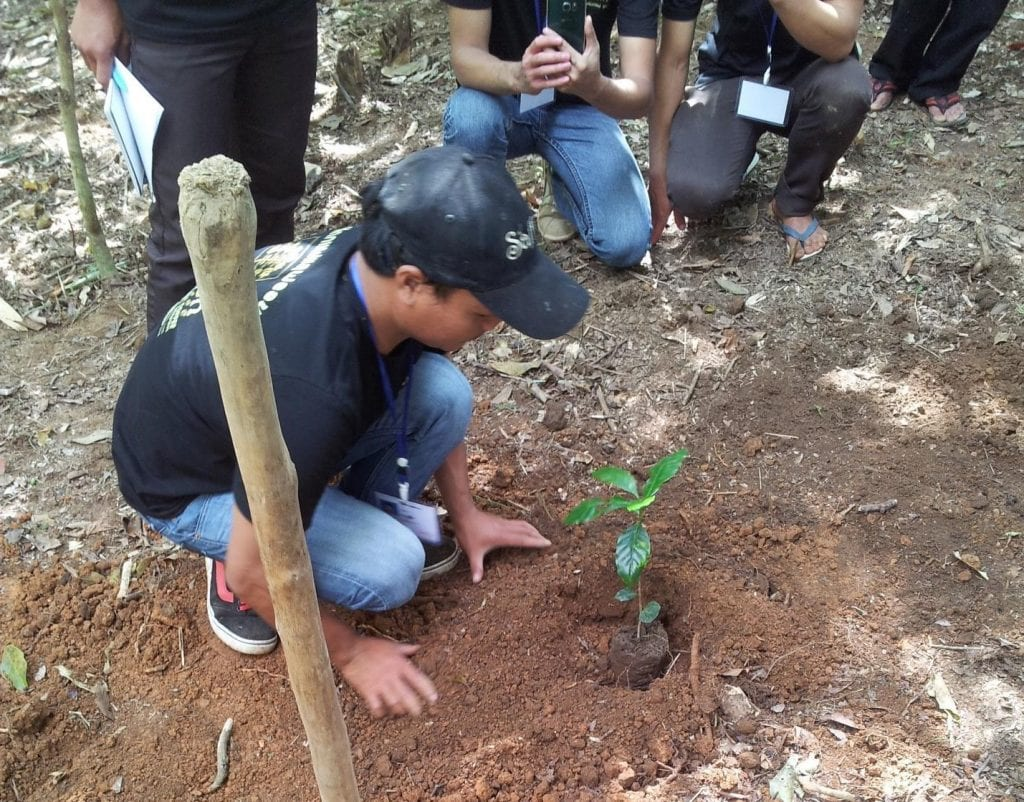 Coffee farmers shows other farmers how to plant young trees