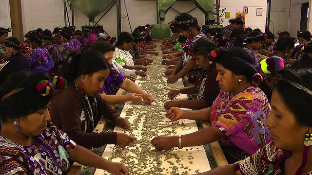 Women sorting coffee
