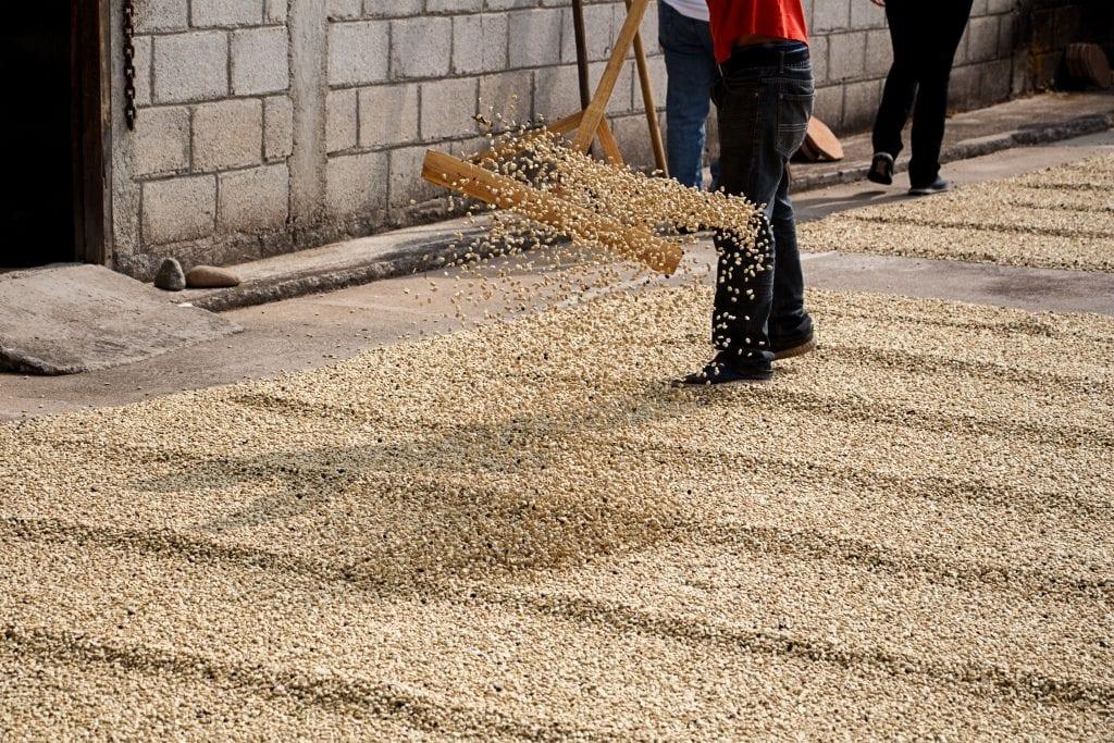 coffee processing honduras