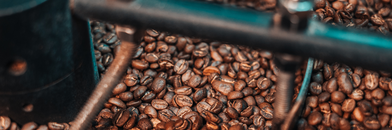 Roasted coffee beans in the cool tray