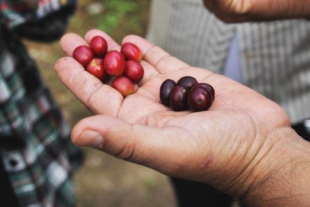 guatemalan coffee