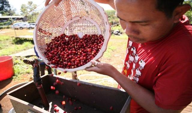 coffee in Laos
