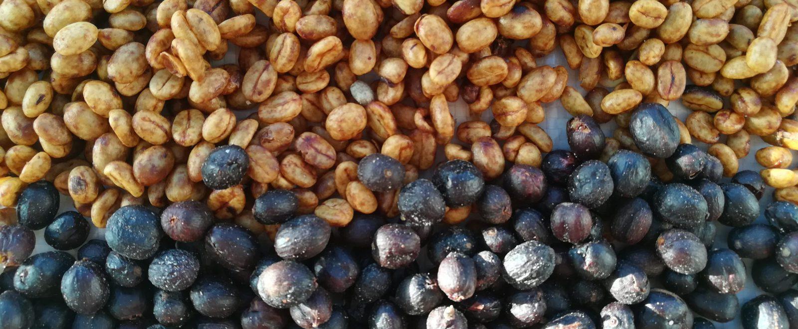 Dryed coffee cherries