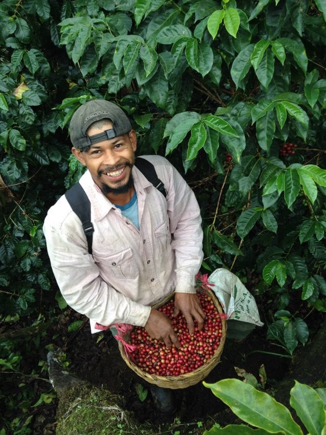 Producer and Coffee cherries