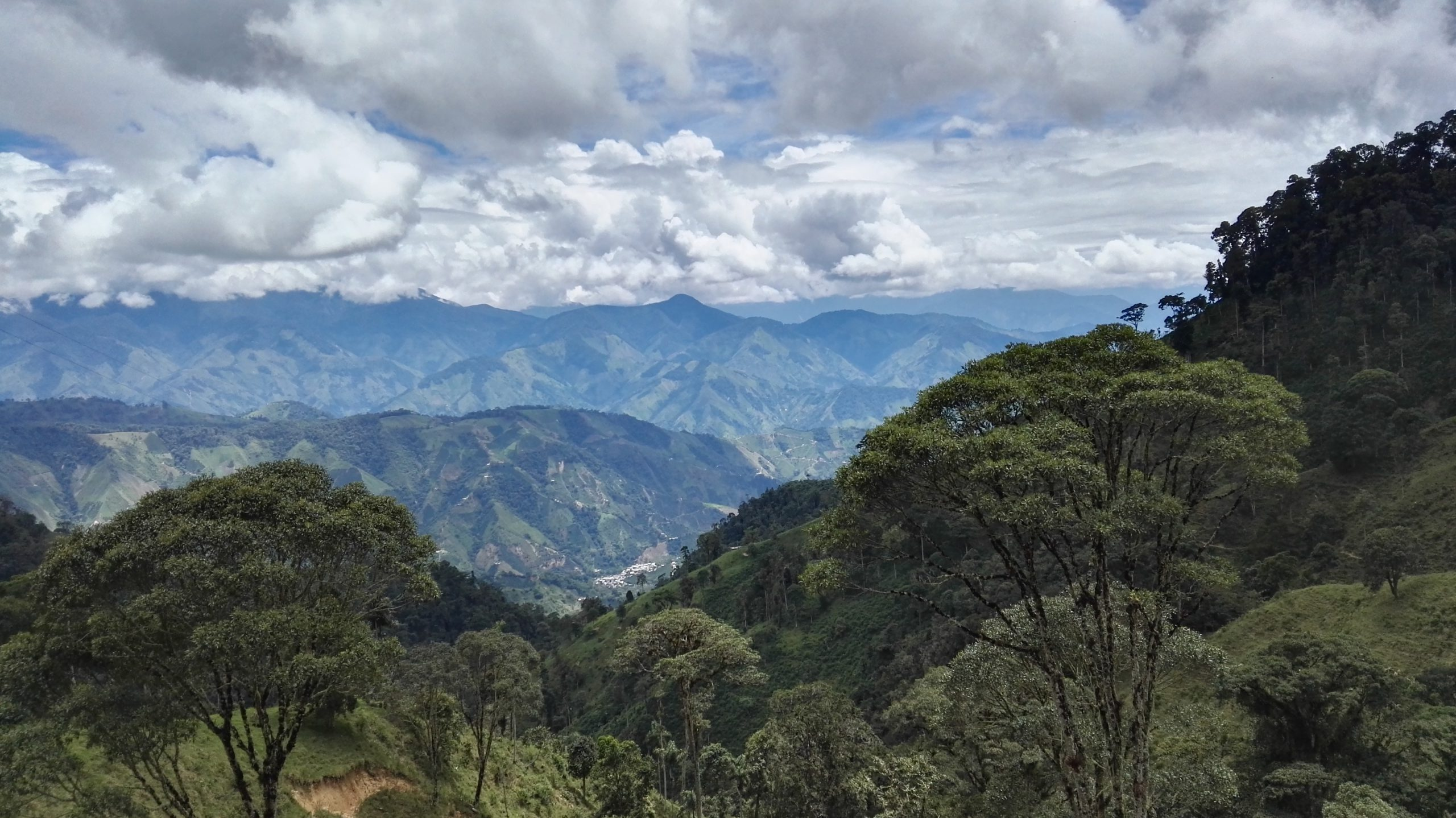 View from a coffee farm