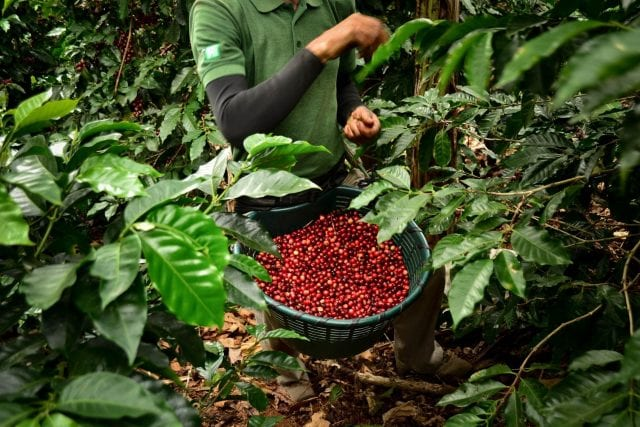 Coffee producer