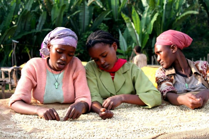 Ethiopian women selecting green coffee beans