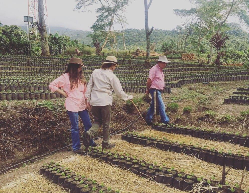 Coffee planting