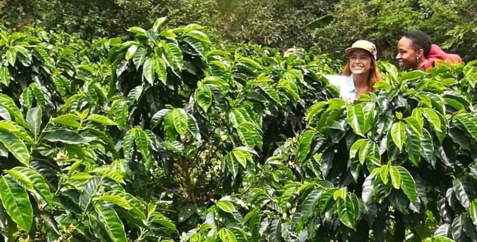 Producer and coffee bean buyer in a coffee crop