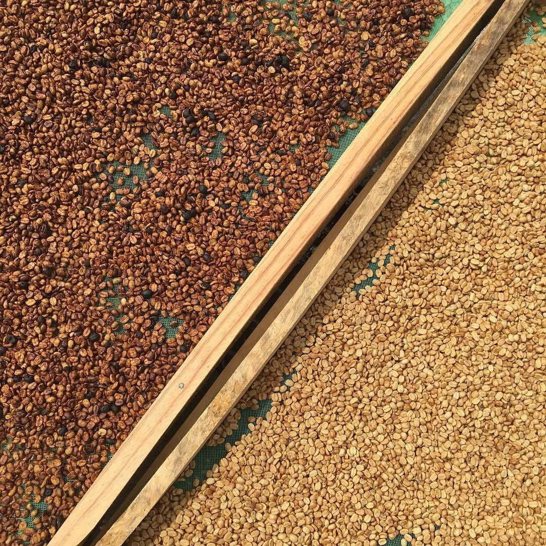 Honey and washed processed coffees