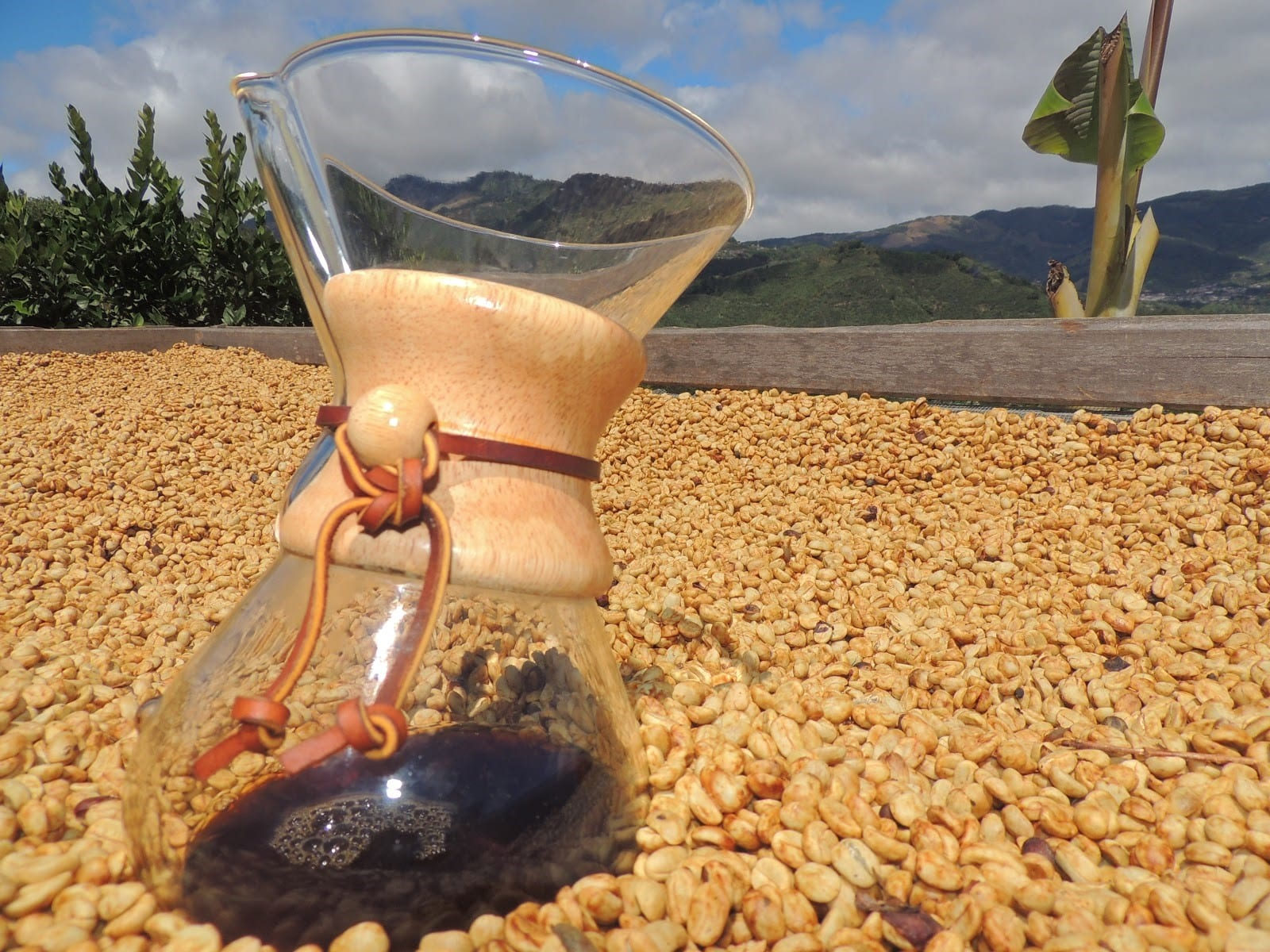honey processed Chemex coffee
